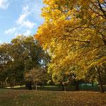 Green Park, Buckingham Palace