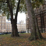 House of Parliament, Westminster Abbey