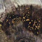 Bisporella subpallida / Blassgelbes Reisigbecherchen