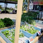 柏木農園の野菜たち