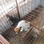 Des chiens affamés et laisser sans nourriture