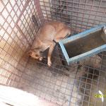 Des chiens morts laisser dans les cages avec les autres chiens