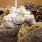 Lain de mouton Centre la Margeride Saugues