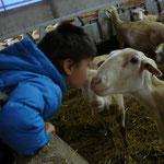 Visite d'une bergerie Centre la Margeride Saugues