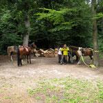 """Tagesritt mit """"Bräteln"""", die Pferde sind ganz brav!"""