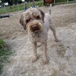 Hund Swip interessiert sich mehr für Spielbälle:)