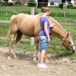 erste Kontaktaufnahme beim freien Arbeiten mit dem Pferd