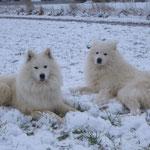 Der erste Schnee 2010.