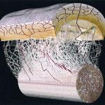 上が皮膚・皮下組織、下が筋の束、間が筋膜(コラーゲン繊維)