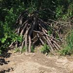Holzhaufen mit größeren Hohlräumen werden von Igeln gern tagsüber als Unterschlupf genutzt. (Foto: W. Jost)