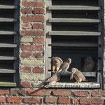 Mäuse stehen bei Jung und Alt auf dem Speiseplan. (Foto: W. Jost)
