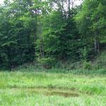 Die 3 Teiche sind im Schnitt 1,50 Meter tief. (Foto: J. Streicher)