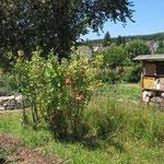 Unser Schaugarten bietet Insekten und kleinen Tieren u.a. eine Wildblumenweise, ein Insektenhotel und eine Trockenmauer. (Foto: W. Jost)