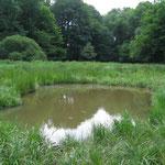 Juni 2011: Die Teiche sind voller Leben. (Foto: J. Streicher)