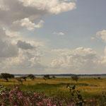Wiesen und Windflüchter auf der Birk