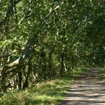 Verwunschener Weg in der Birk