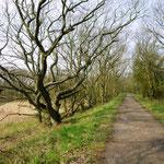 Die Birk im Winter
