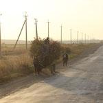 Pferdefuhrwerk m. Maisstroh, Ukraine