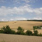 gelbes Weizenland