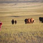 Pferdetreiben mit Kind