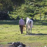 Mann mit Pferd, Arcos de la Frontera