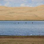 Vogelflug am Salzsee in der Wueste
