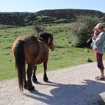 Sarah erster Kontakt mit Pferd