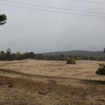 Sand im Herbstwald