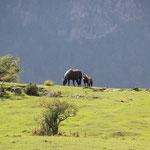 Pferde auf Bergrücken