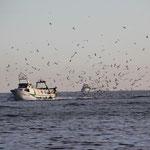 Fischer auf dem Nachhauseweg