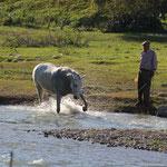 Pferd beim Baden, Arcos de la Frontera