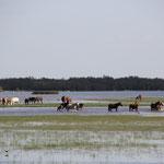 Pferde auf dem Weg, El Rocio