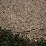 Raupenschlange