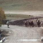 unsere letzten Kamele auf der Strasse