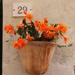 Blumenschmuck in Monte Rosso