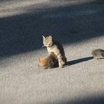 Katzen am morgen, Fonte Colombo