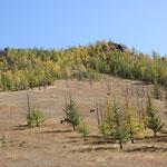 Pferde im Herbstwald, Mittagsplatz