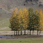 Herbstbäume vor Jargalant