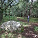 Spaziergang im Menhirwald
