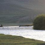Yaks mit Hirte auf dem Heimweg