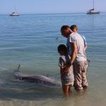 Delphinfüttern im Monkey Mia