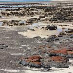 Stromatoliten, Hamelin Pool