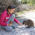 Quokkas leben nur auf Rottnest Island