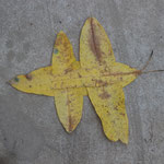 Schmetterling aus Blättern, Kampot, Kambodscha