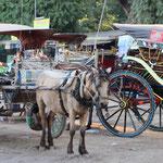 Pferdekutschen in Begann
