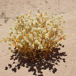 Blütenpracht im Sand