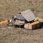 Mais wird zum Trocknen ausgelegt