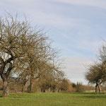Streuobstwiese Londorf