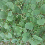 Hang zum Grünen I, Digital auf Alu-Dibond 34.0x25.6cm 2015