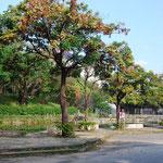 Onoyama Park Beplanzung